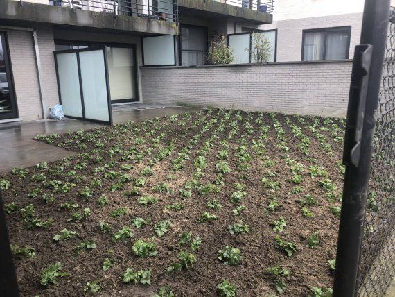 Omvormen gazon naar beplanting Asse
